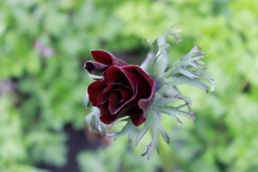 flower test 026