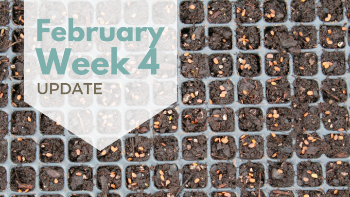 February Week 4 Update – Germination Celebration, lol.