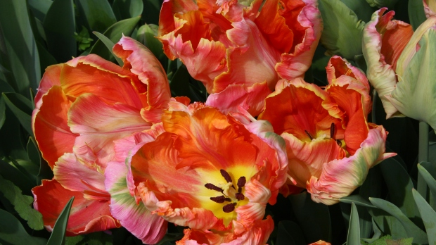 bouquet1 016