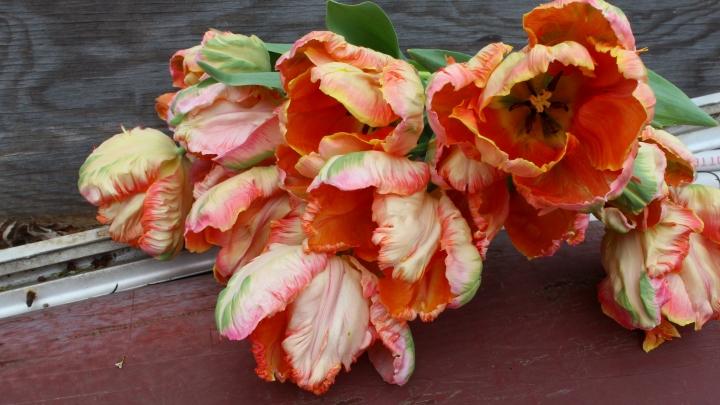 bouquet1 024