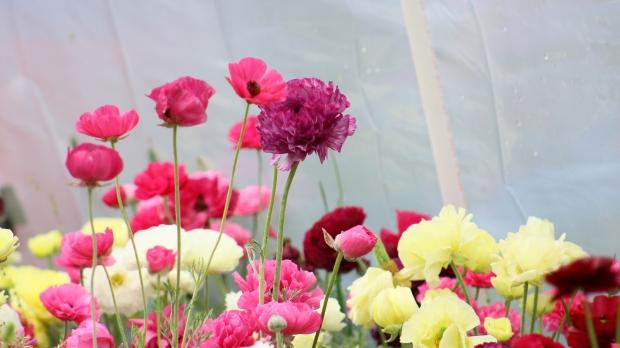 pink_bouquet 013