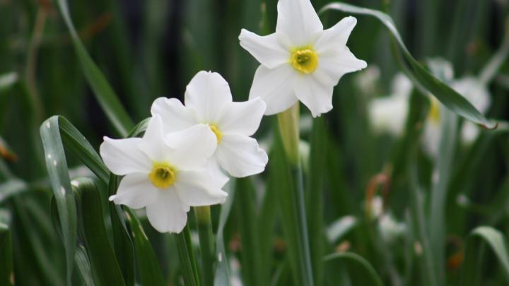spring_bouquet_4 002