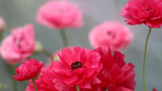 spring_bouquet_4 012