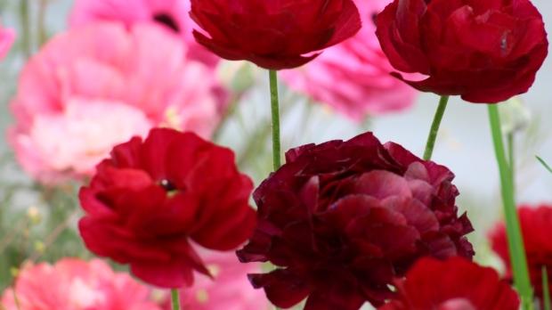 spring_bouquet_4 015