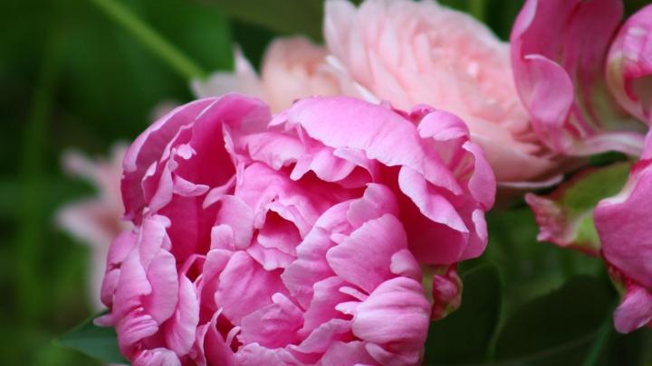 pink_arrangement 002