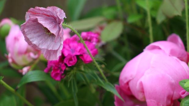 pink_arrangement 025