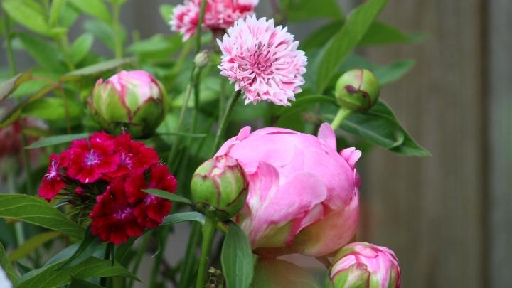 pink_arrangement 033