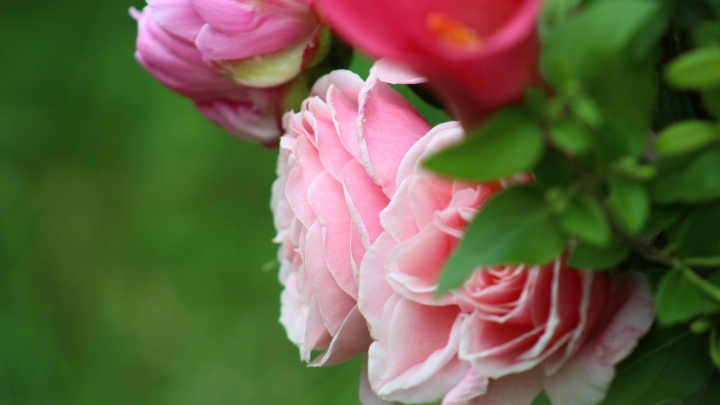 pink_arrangement 035