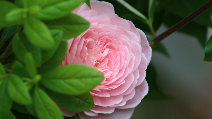 pink_arrangement 046