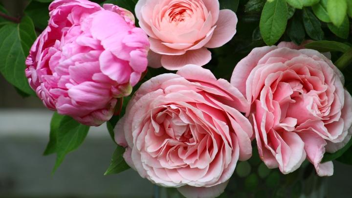 pink_arrangement 052