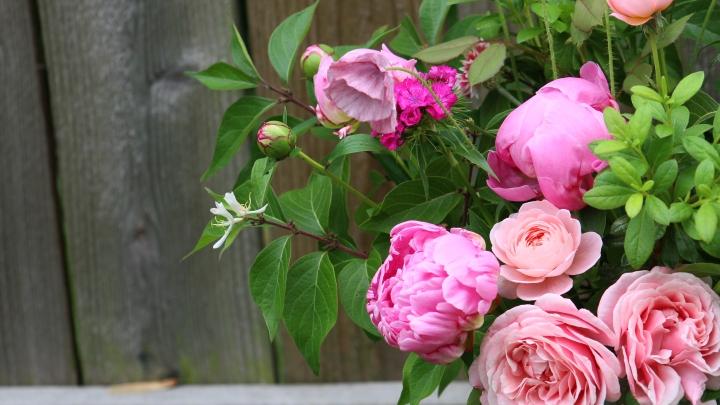 pink_arrangement 062