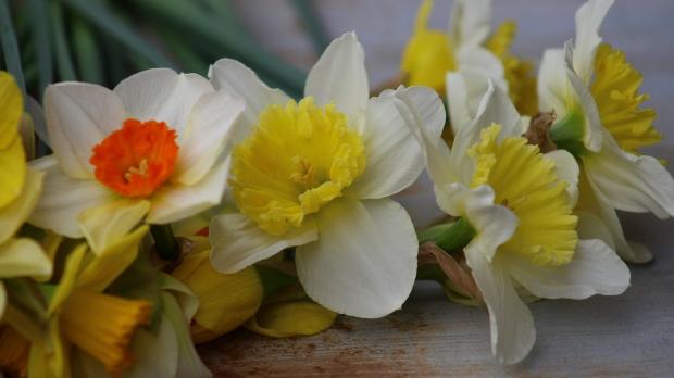 daffodils-009