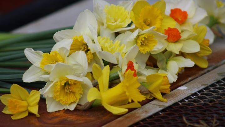 daffodils-017