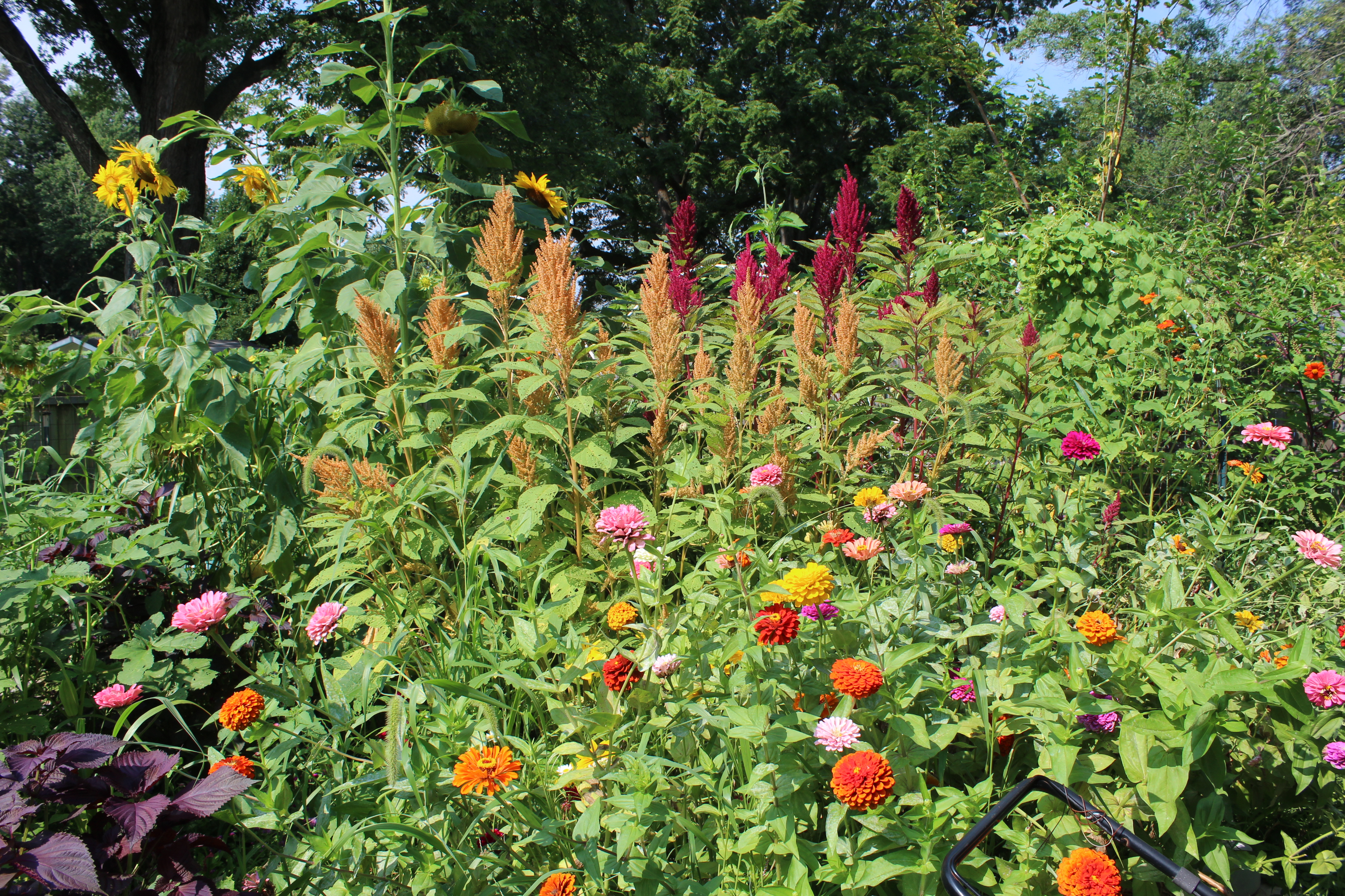 Growing flowers from seed practical advice for seed starting first year flower growers will likely want to compose the majority of their cutting garden of annuals these fast growing plants will quickly fill beds and izmirmasajfo