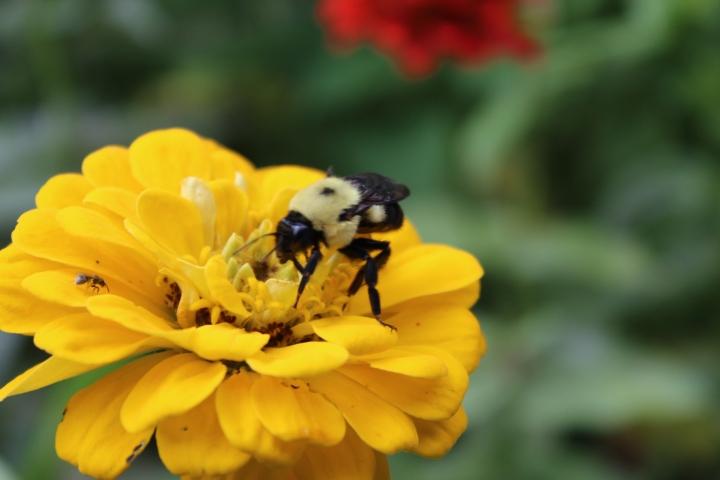 Favorite Flowers for Beginners – Growing Flowers fromSeed