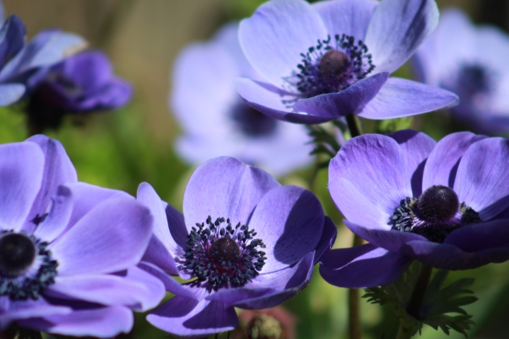 Winter Sowing Results Pt. 2 + Garden Update – Week 2 – April2018