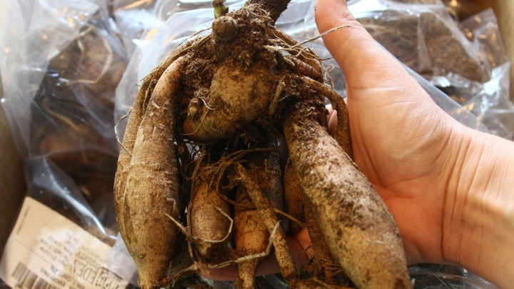 Planting Dahlia Tubers into the Garden + Eden Brothers DahliaUnboxing