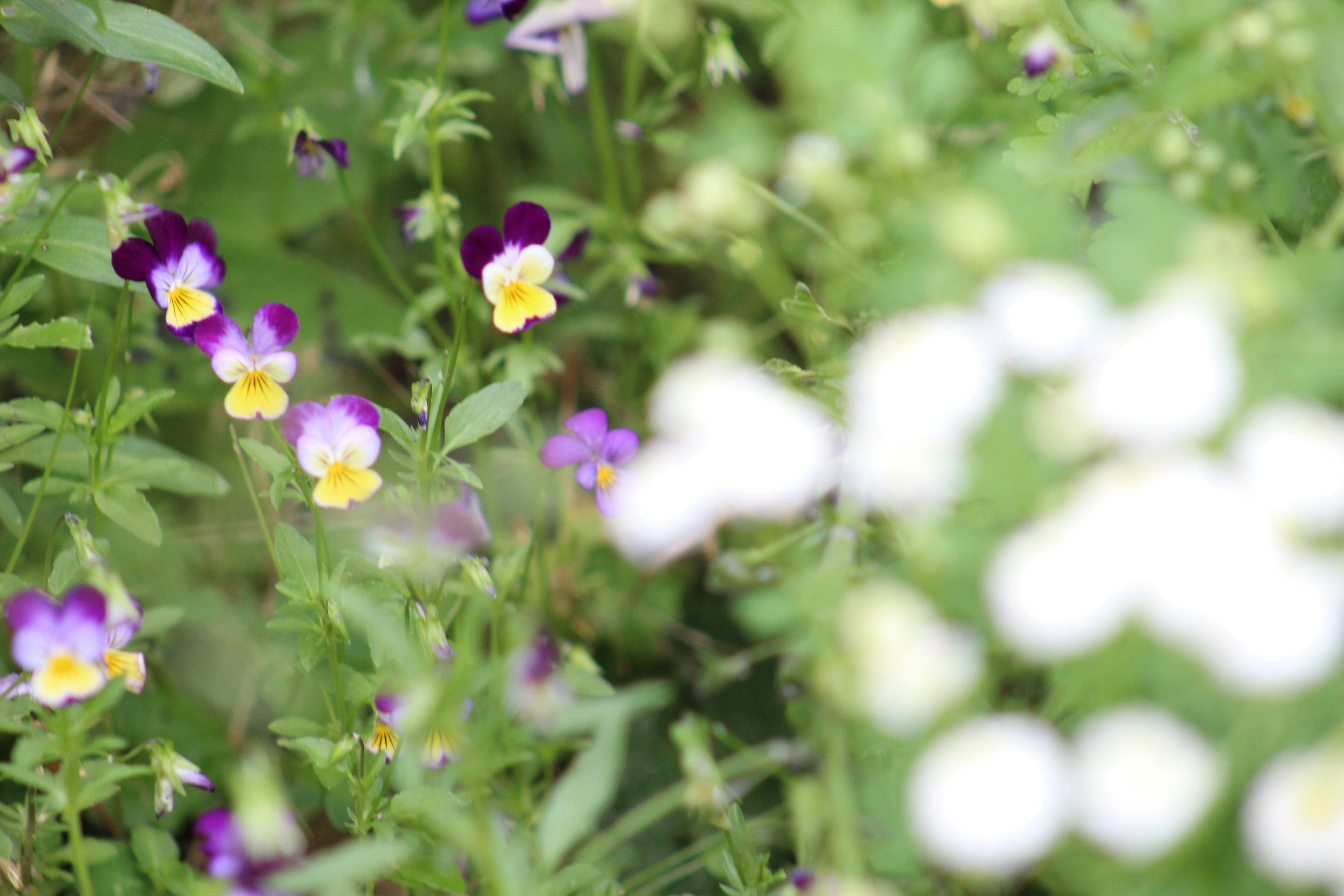 Beginning Of June Garden Update Cut Flower Patch And Vegetable Garden