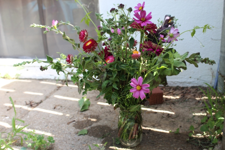 Zinnias, Lettuce, Cosmos, and More…