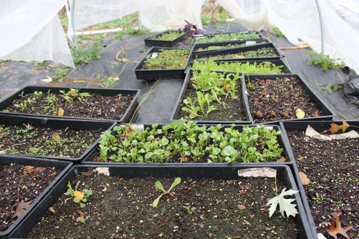 Fall Flower Seedling Update – Cut FlowerFarm